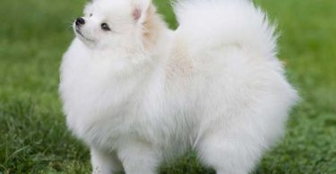 5 Best Dog Beds for Pomeranians